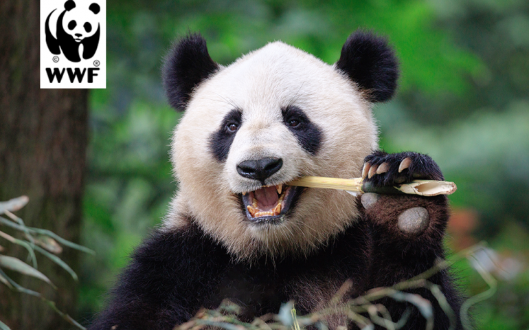 Feed panda, get word count tool
